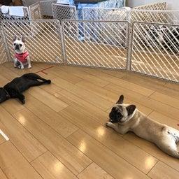 画像 犬の幼稚園〜水曜クラス(^_-)〜 の記事より 12つ目
