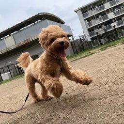 画像 犬の幼稚園〜月曜クラス( ^∀^)〜 の記事より 4つ目
