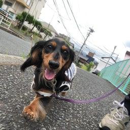 画像 犬の幼稚園〜月曜クラス( ^∀^)〜 の記事より 3つ目