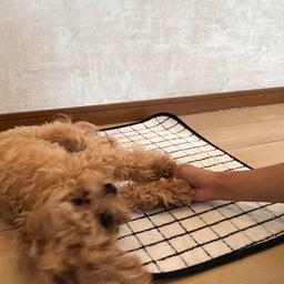 画像 犬の幼稚園〜月曜クラス( ^∀^)〜 の記事より 9つ目