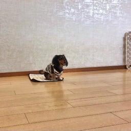 画像 犬の幼稚園〜月曜クラス( ^∀^)〜 の記事より 11つ目