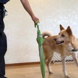 画像 犬の幼稚園〜水曜クラス(^_-)〜 の記事より 9つ目