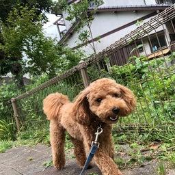 画像 犬の幼稚園〜月曜クラス( ^∀^)〜 の記事より 5つ目