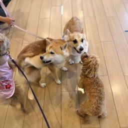 画像 犬の幼稚園〜水曜クラス(^_-)〜 の記事より 1つ目