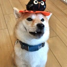 画像 犬の幼稚園〜水曜クラス(^_-)〜 の記事より 5つ目