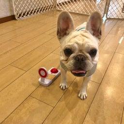 画像 犬の幼稚園〜月曜クラス( ^∀^)〜 の記事より 10つ目