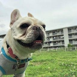 画像 犬の幼稚園〜月曜クラス( ^∀^)〜 の記事より 2つ目