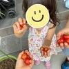 家庭から緑を!トマトの収穫できました〜の画像