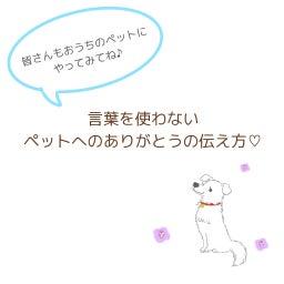 画像 40回目》言葉を使わないペットへのありがとうの伝え方♡ の記事より 1つ目