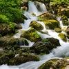 「水」の本質 ~陰占から読む「木火土金水」の画像