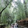 嵯峨野嵐山と金閣寺を観るの画像