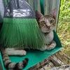 アニマルガーデン猫舎よりご寄付のお願いの画像