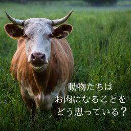 画像 動物たちは、お肉になることをどう思っている? の記事より 1つ目