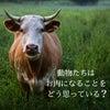 動物たちは、お肉になることをどう思っている?の画像