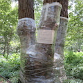 Quercusの樹木ブログ