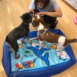 画像 犬の幼稚園〜木曜クラス( ^∀^)〜 の記事より 10つ目