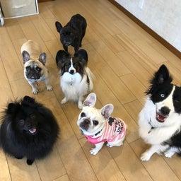 画像 犬の幼稚園〜木曜クラス( ^∀^)〜 の記事より 13つ目