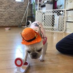画像 犬の幼稚園〜木曜クラス( ^∀^)〜 の記事より 5つ目