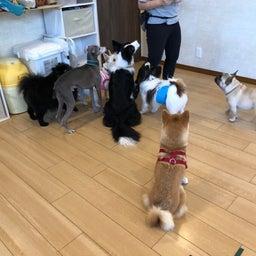 画像 犬の幼稚園〜木曜クラス( ^∀^)〜 の記事より 6つ目