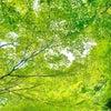 シアワセのカタチの画像