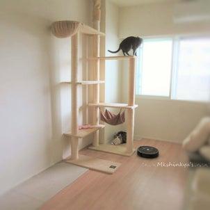 いゃいゃいゃいゃ!! 猫タワーにカビがの画像