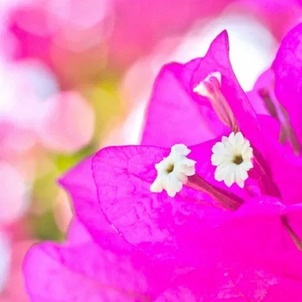 今日の誕生花☘️の画像