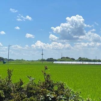 清く正しい日本の夏休み!田んぼの生き物と、極上のおにぎり