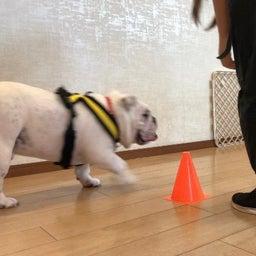 画像 犬の幼稚園〜金曜クラス(^O^)〜 の記事より 12つ目