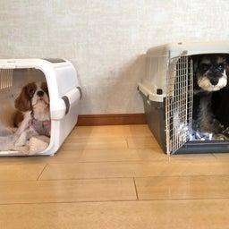画像 犬の幼稚園〜金曜クラス(^O^)〜 の記事より 10つ目