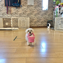 画像 犬の幼稚園〜金曜クラス(^O^)〜 の記事より 8つ目
