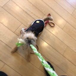画像 犬の幼稚園〜金曜クラス(^O^)〜 の記事より 6つ目