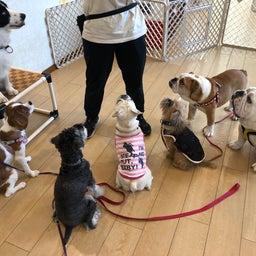 画像 犬の幼稚園〜金曜クラス(^O^)〜 の記事より 4つ目