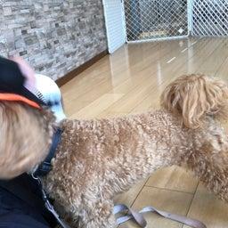 画像 犬の幼稚園〜金曜クラス(^O^)〜 の記事より 9つ目