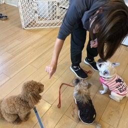 画像 犬の幼稚園〜金曜クラス(^O^)〜 の記事より 3つ目