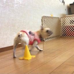 画像 犬の幼稚園〜金曜クラス(^O^)〜 の記事より 11つ目
