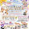 ◆開催間近★8/7ねこフェス inあまがさき◆子猫まつり♪保護ねこ譲渡!の画像