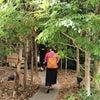 樹木のカフェとスタバで兵庫のフラペチーノ♡の画像