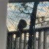 ベランダに 鳥さんがの画像