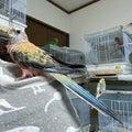 ♪鳥と暮らす