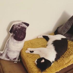 昨夜の猫さまの画像