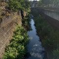 【ゴールは多摩川】近所の小河川 ウナギポイント調査【スッポンのいる川】