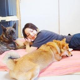 画像 ママの隣は私!甲斐犬と柴犬がお互いやきもち!?と思ったら甲斐犬ハルヱが優しすぎた!! の記事より 2つ目