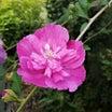 (追記有)Fちゃん…今日は支離滅裂だよw 呆けたSちゃん、庭の花々と黄色アゲハ、最近の投資は?