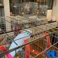 あんきなもんとベリーちゃん〜我が家の可愛い鳥たち・アオメキバタンの里親になりました〜&ミニーのリウマチ闘病記