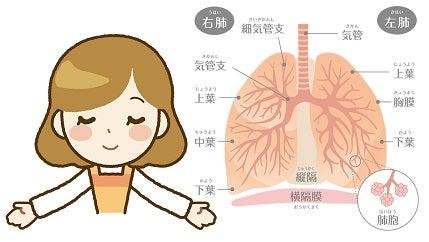 呼吸器のメカニズム