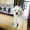大阪屋さんの愛犬パルマくんYouTubeデビュー♪大阪屋末広店(旭川)