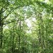 山荘:森のお散歩・・♪