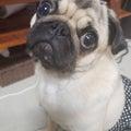 愛犬リコル(●´ω`●)