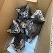 猫ちゃんの里親探し♡茨城コンパニオンスタッフブログ♡
