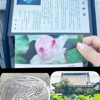 近江妙蓮公園 ・ 蓮 ❀✿❀✿